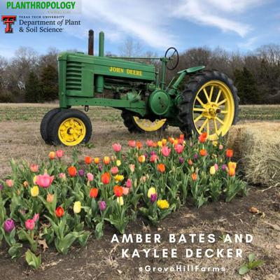 Cover art for 12. Agritourism, Grad School Bonding, and Bruiser the Pig w/ Dr. Amber Bates and Kaylee Decker