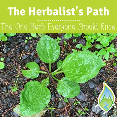Cover art for The One Herb Everyone Should Know, & It's Right In Your Backyard!