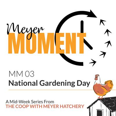 Cover art for Meyer Moment: National Gardening Day (With Chickens)!