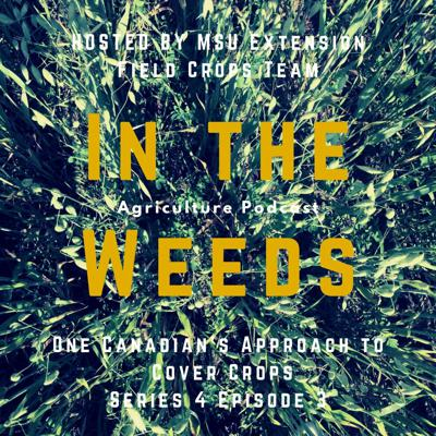 Cover art for In the Weeds: One Canadian's Approach to Cover Crops