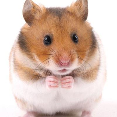 How My Hamster Lost Its Eye