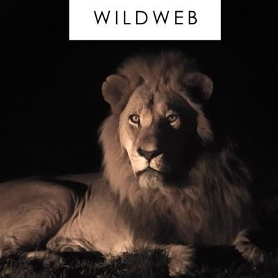 Safaris Africa - WildWeb