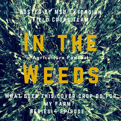 Cover art for In the Weeds: What does this cover crop do for my farm?