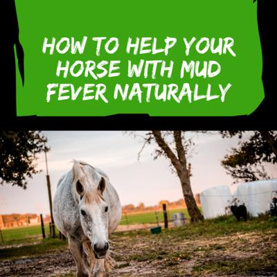 Cover art for Episode 27 - How to Help Your Horse With Mud Fever Naturally
