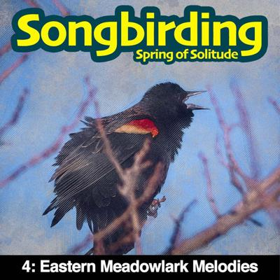 Cover art for S3E4 - Eastern Meadowlark Melodies