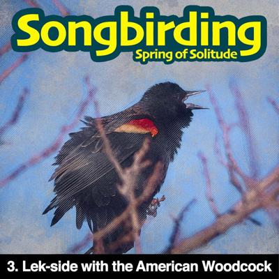 Cover art for S3E3 - Lek-side with the American Woodcock