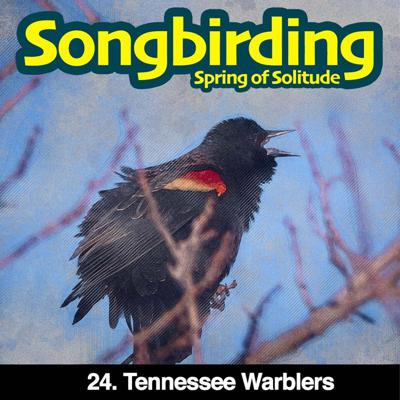 Cover art for S3E24 - Tennessee Warblers