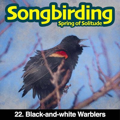 Cover art for S3E22 - Black-and-white Warblers